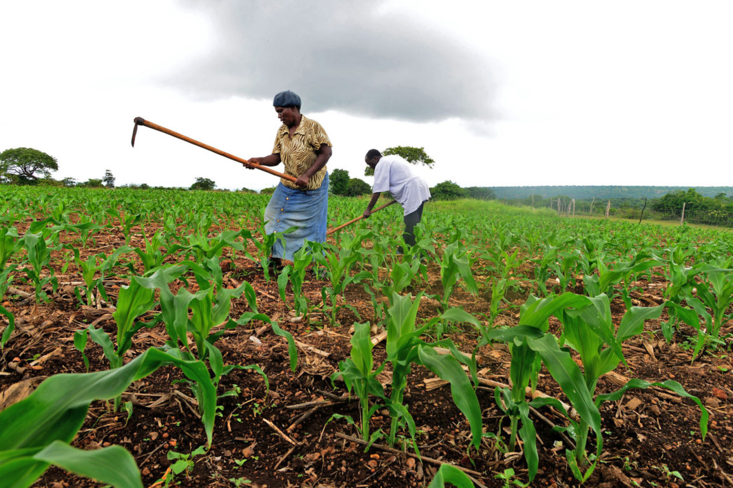 Levies On Cash Crops Abolished in Tanzania - East African Agri-News